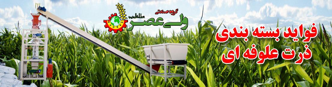 Field of growing corn